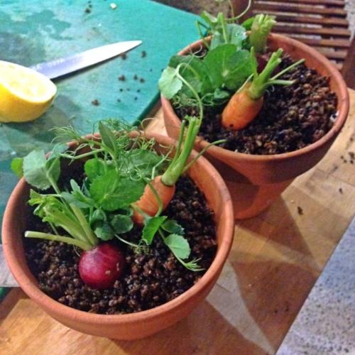 Flower Pot Salad